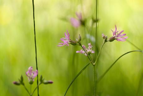 Tussen het gras