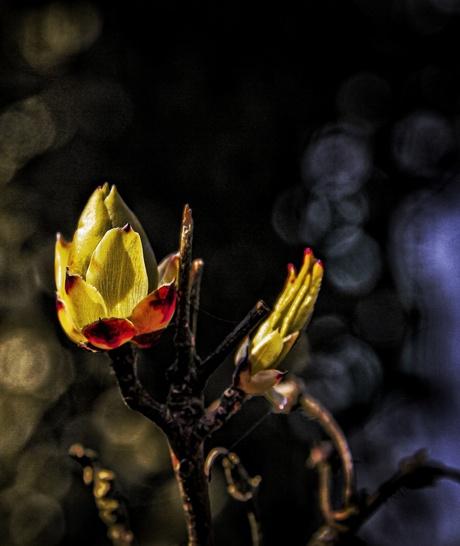 De kleurrijke maar eenzame bloem