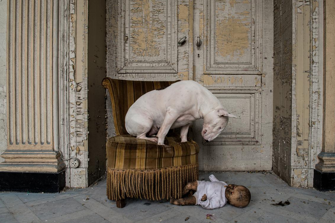Wanna Play? - - - foto door info-2708 op 22-12-2015 - deze foto bevat: pop, dieren, huisdier, hond, deuren, claire, stoel, verlaten, urbex, decay, bullterrier, bull terriër, furbex