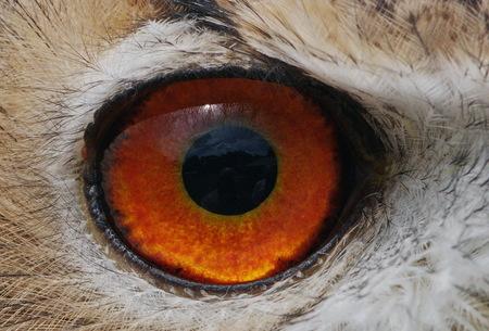 Ik zocht een spiegel - Oehoe tijdens Roofvogelshow Eindhoven - foto door keegoo op 21-11-2010 - deze foto bevat: uil, roofvogel, oehoe