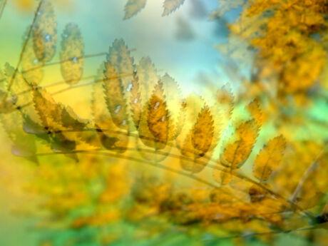 Herfstbladeren (meervoudig)