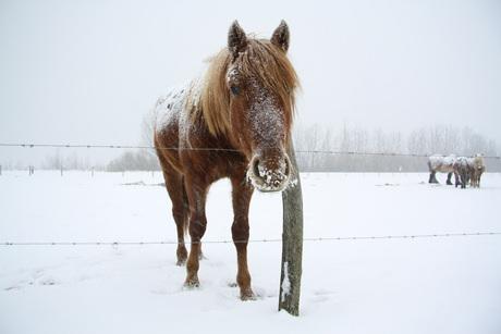 Sneeuw in de Biesbosch