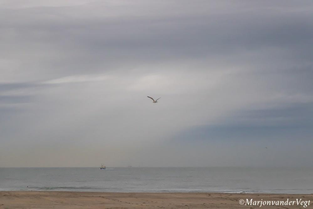 Ik zwaai je uit - Iedereen hartelijk dank voor alle reacties & waardering voor mijn werk.  Laatste loodjes opknappen, toewerken naar verhuizen, ben nu al gesloopt.  - foto door MarjonvanderVegt1967 op 15-10-2019 - deze foto bevat: kleuren, wolken, strand, zee, meeuw, boot, golven, havenhoofd, horizon, buien, Den Haag, zon zee, marjon van der vegt
