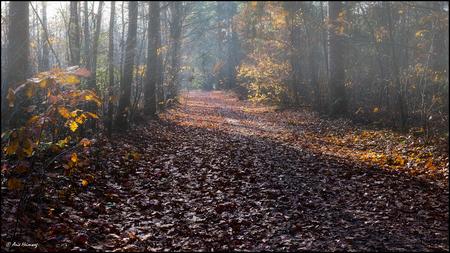 * Bonaparte * - - - foto door AriEos op 12-11-2020 - deze foto bevat: boom, natuur, geel, herfst, blad, landschap, mist, bos, tegenlicht