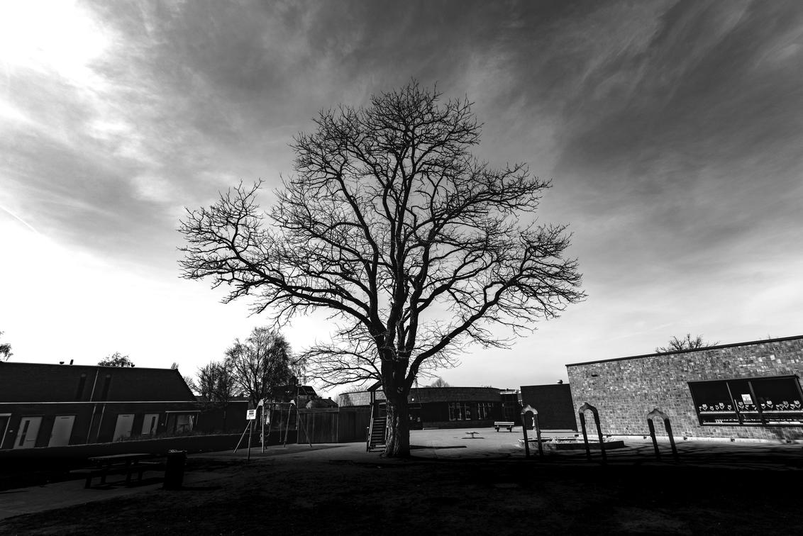 Urban Tree - - - foto door rakus op 08-04-2018 - deze foto bevat: boom, natuur, zwart wit, Tokina 16-28, nikon d750