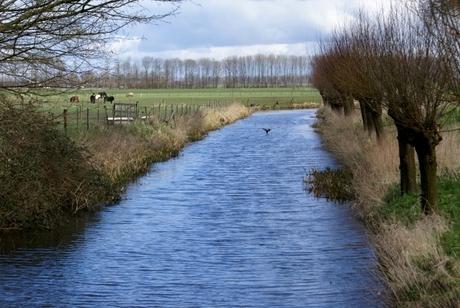 2009-03 Linge nabij Buren (Gld.)