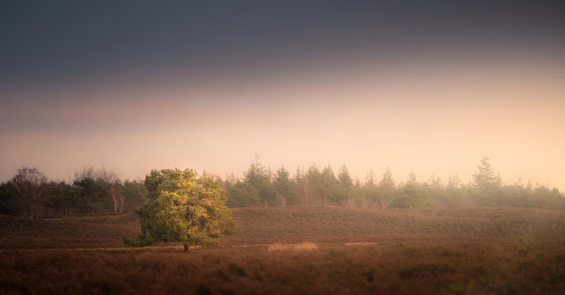 Last shaft of light - Het laatste zachte licht streelde deze boom en zorgde voor een geluksmoment in deze duistere tijden. - foto door renevierhuis op 01-02-2021 - deze foto bevat: natuur, licht, avond, zonsondergang, landschap, mist, heide, bomen