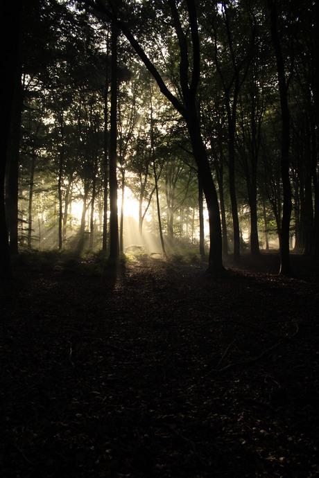 ochtend straalen buiten het pad