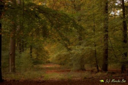 Veluws bos - Een magisch moment van kleuren en licht in een Veluws bos - foto door MarchaB op 03-03-2021 - deze foto bevat: natuur, licht, landschap, bos, bomen