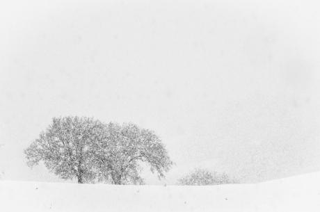 Neve...