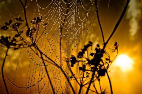 Spinnenweb ondergedompeld in dauw