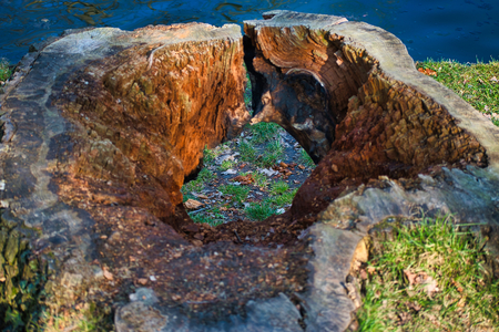 Doorkijk - Hoe een simpel plukje gras verandert in een schilderij, simpelweg door een ander perspectief - foto door HJS1964 op 02-03-2021 - deze foto bevat: boom, water, natuur, meer, nederland