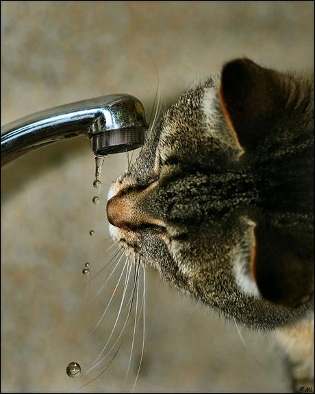 Gek op water