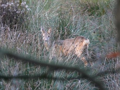 Bambi in het wild