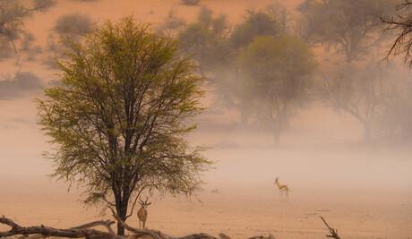 Stofstorm in Namibie