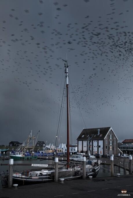 Filmset haven Oudeschild.