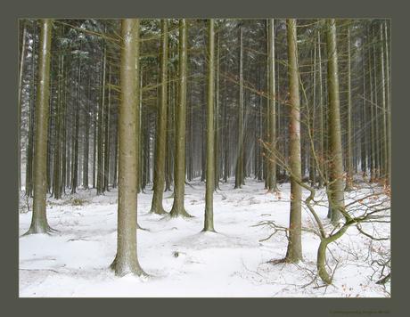 Sneeuwjacht Ardennen