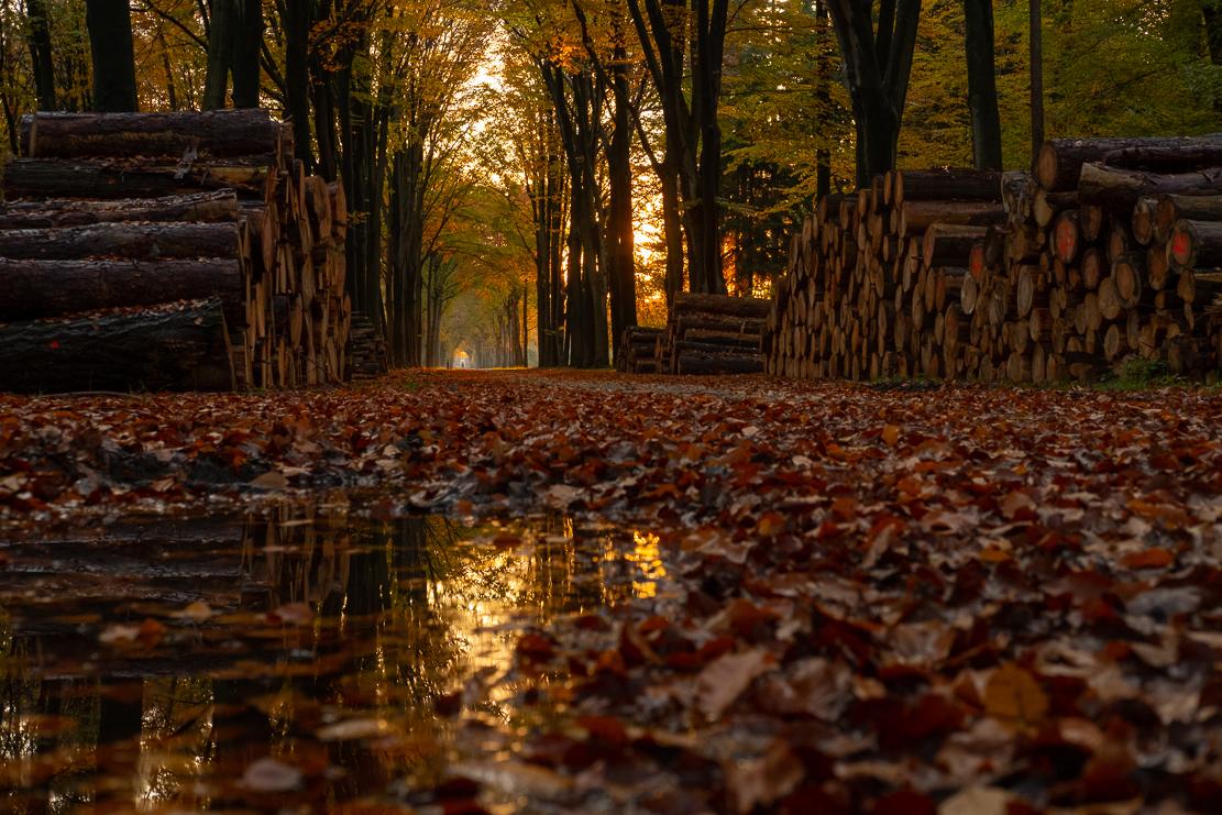 Na regen komt zon - - - foto door burrybrink op 13-12-2019 - deze foto bevat: zon, water, natuur, licht, herfst, spiegeling, landschap, bos, bomen