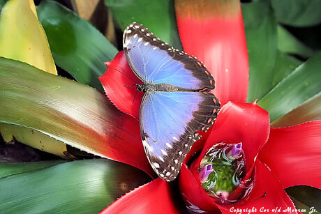 vlinders in blijdorp