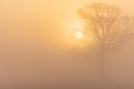 Misty winter sunrise