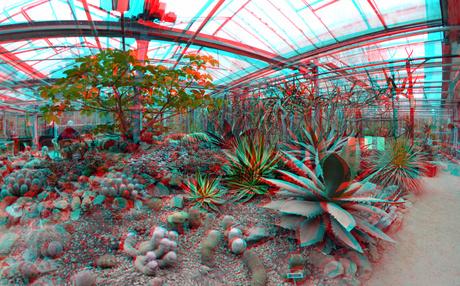 Cactus-kas Arboretum Trompenburg Rotterdam 3D
