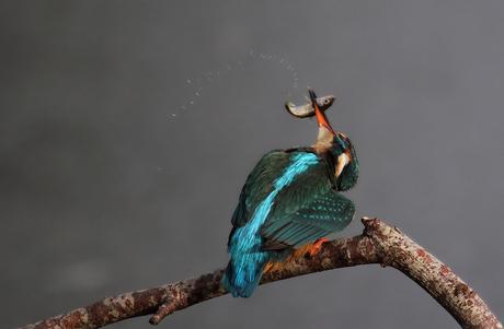 The swinging fish