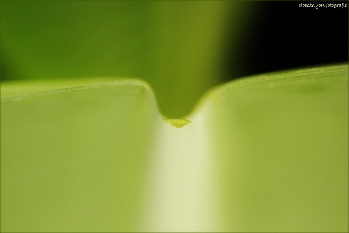just a little drop of water on a leaf... - in vele tinten groen...  vind m gewoon mooi. allen een heerlijk weekend gr pippah - foto door close.to.yoU.fotografie op 30-08-2013 - deze foto bevat: blad, bush, burgers zoo., duppel water