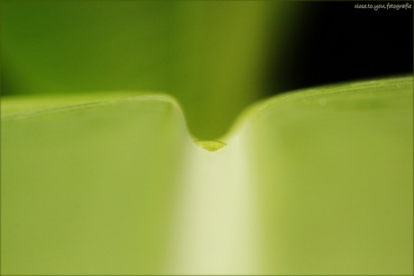 just a little drop of water on a leaf...