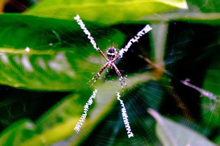 Spin Curacao - Spin in onze tuin in Jan Thiel Baai - foto door PTRSTNSN op 30-04-2019 - deze foto bevat: spin, insect, curacao