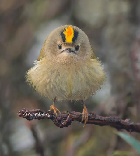 Angrybird!