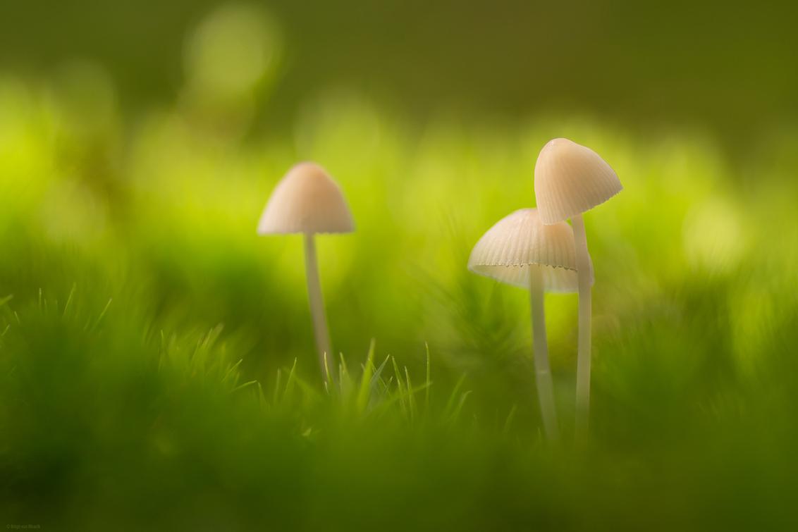 Give me a hug - - - foto door mourik57 op 28-10-2019 - deze foto bevat: macro, natuur, licht, herfst, mos, paddenstoel, bos, sfeer, oktober, drie, brigit, bokeh