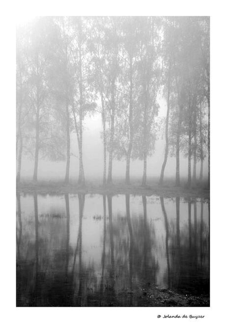 Misty trees 2