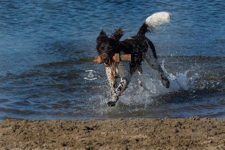 Hond geniet in het water - Tijdens mijn wandeling in het natuurgebied in Woerden waren er verschillende honden heerlijk in het water aan het spelen. Net als ik genoot deze hond - foto door Valeries-Photography op 05-03-2019 - deze foto bevat: zon, strand, water, lente, natuur, winter, spelen, dieren, huisdier, hond, natuurgebied, zwemmen, fun, utrecht, playtime, woerden, cattenbroekerplas, swimmingdog, wetdog