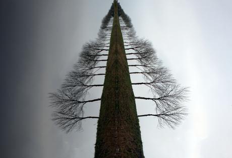 Bomen die op een Boom lijkt