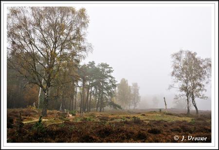 De Stulp - Open vlakte bij Lage Vuursche - foto door janv2 op 16-12-2013 - deze foto bevat: mist, heide, den, berk, stulp, dood hout, Lage vuursche