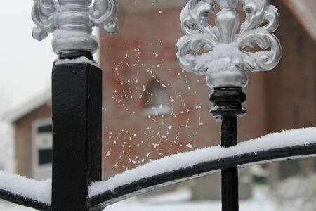 eerste sneeuw, tere vorm - Vanmorgen 4 jan. 2016. De eerste sneeuw van deze winter. Even rondje door dorp gemaakt. Bij het kerkje zag ik dit web aan het hekwerk. - foto door ljdrost op 04-01-2016 - deze foto bevat: sneeuw, winter, teer, ljdrost, nw jaar-1e sneeuw, web met sneeuw