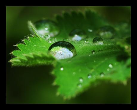 Rain! II