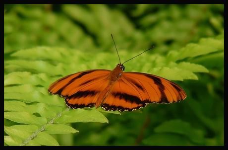 Vlindertuin Emmen 2