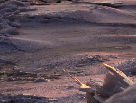 waddenzee on ice