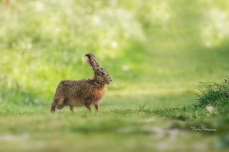The hare and me