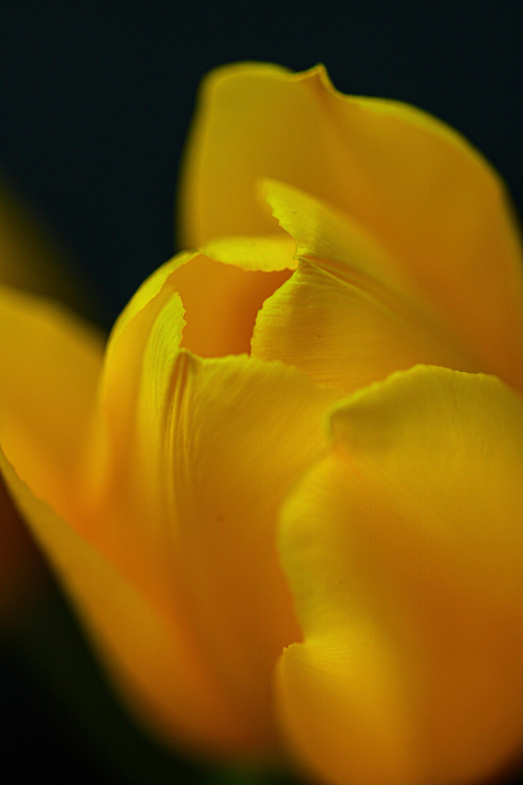 IMG_3992 - - - foto door maritabma op 08-03-2021 - deze foto bevat: macro, lente, natuur