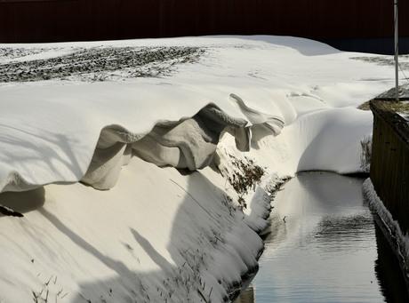 sneeuwgrillen