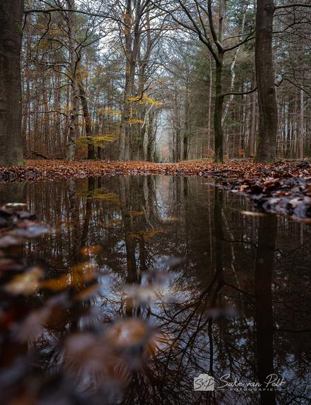 Herfstreflecties - Reflecties vergeet ik vaak op te letten als ik ga fotograferen. Het afgelopen weekend heb ik er meer op gelet. Hier de eerste poging in het Leuvenums - foto door Sake-van-Pelt op 24-11-2020 - deze foto bevat: groen, lucht, wolken, boom, bladeren, water, natuur, regen, druppel, geel, licht, herfst, bospad, blad, reflectie, landschap, bos, pad, beuk, nederland, weg, kaal, diepte, plas, laan, bosweg, seizoen, seizoenen, beuken, Leuvenumsebos, leuvenum