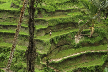 Unesco Rijstvelden, Bali
