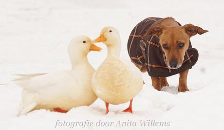 Dina goes duckies