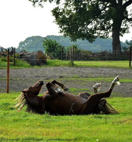 Paard met jeuk.