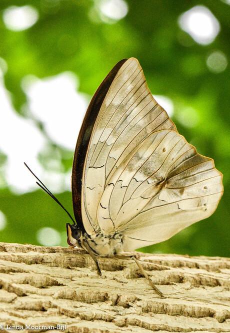 Vlindertuin 2