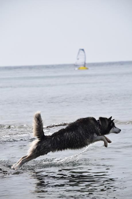 Go Fetch!!