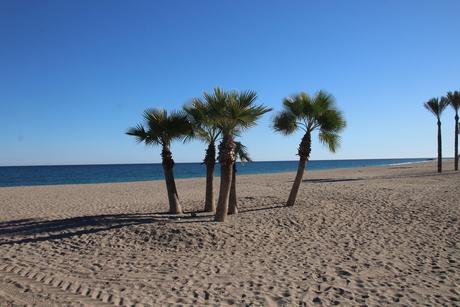 Strandpalmen