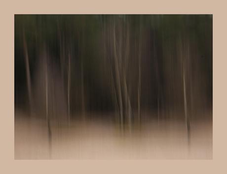 Project I(nspiratie) Beweging: Trees